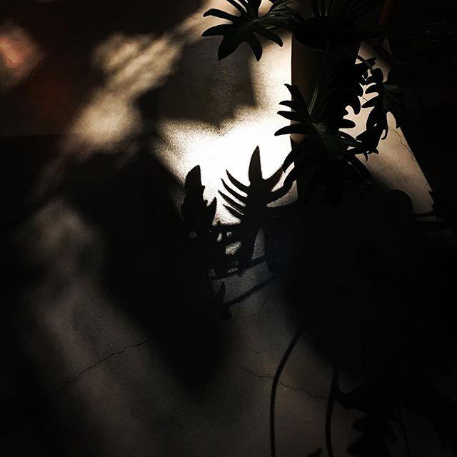 ちょっとホッとする感じ。閉店後の風景です^^#0CAFEINN #山本玄匠 #祇園 #京都 #祇園カフェ #祇園ゲストハウス #GensyoYamamoto #gionkyoto #gioncafe #gionguesthouse #kyotocafe #kyotoguesthouse